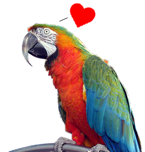 Sex and the Single Parrot: Insights for Bewildered Bird Owners