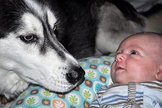 Dogs And Infants Newborns How To Introduce A New Baby
