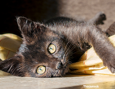 can anorexia in cats be cured