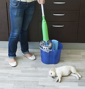 Household Cleaning Products And Your Pet What You Should