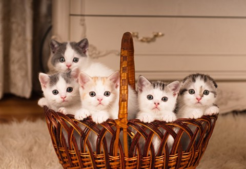 Image of: Kitten Season Petfinder What Is Kitten Season