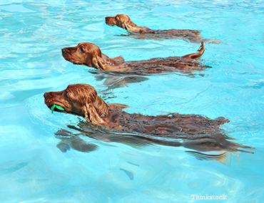 dog paddle swimming