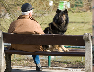 Old man with a dog at the park