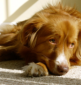 The Dangers of Rat Poison to Dogs and Cats