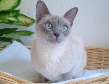 ripped's art lottery The-tonkinese