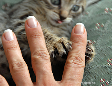 Cat Grabbing Finger