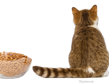 Wet Food For Cats With Liver Disease