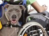 4 Paws for Ability: A Mission to Connect Service Dogs with Disabled Children
