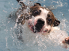 New Dog Swimming Study Surprises Canine Community