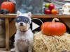 5 Horribly Hilarious Halloween Pet Videos #1