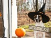 5 Horribly Hilarious Halloween Pet Videos