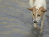 Austin Floods Force Shelter Animals to Evacuate: City Rallies in Support