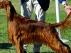 Dogs Poisoned at Dog Show