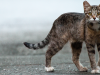 Study Offers New Technique for Feral Cat Control