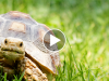 This Time the Tortoise Might Actually Beat the Hare