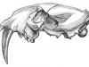 Sabertooth Skelton