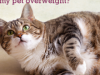 5 Must Ask Questions about Pet Obesity