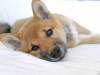 10 Things You Need to Know About Heartworm and Your Dog