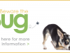 Beware the Bug: Parasite Prevention and Screening for Dogs