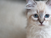 Diabetes Complications in Dogs and Cats: Diabetes Ketoacidosis (DKA)