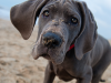Do Dogs Experience Growing Pains?