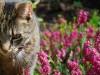 cat in a field of flowers