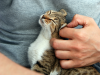 Flea and Tick Insecticide Poisoning in Cats