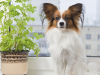 Poisonous Plants and Dogs