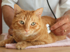 Five Questions to Ask at Your Cat's Next Veterinarian Exam