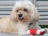Monitoring Dog Bandages at Home