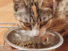 What You Need to Know about Feeding Kittens