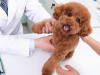 What's The Difference between Preventive Care Plans and Pet Insurance?