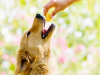 """Safe Treats: Can my Dog have """"People"""" Food?"""