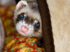 Tips for Keeping Your Exotic Pet Safe from Household Toxins