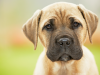 The Top 10 Canine Toxins