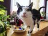The Top 5 Cat Toxins
