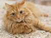 The Vet Files: Why Is My Cat Suddenly Peeing on the Floor?
