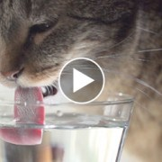Cute Kitties Drinking in Slow-Mo: Can You Spot The Difference?