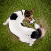 Spinning is one dog poop personality