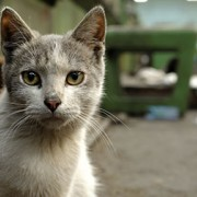 How to Help Feral Cats