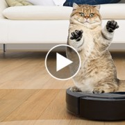 Is it a Vacuum or a Fancy Car for Pets?