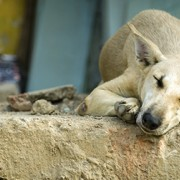 Largest Quake of 2015 Strikes Chile: Pet Rescue Groups Respond