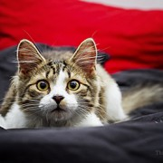 New Seizure Study Shows Your Cat Might Need Earplugs