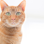 5 Things Vets Hate About Kidney Disease in Cats … And How That's About to Change