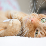 Neoplasia in Cats