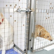 Ticks crawling up the walls of a dog kennel
