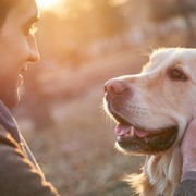 golden retrievers can get hemangiosarcoma