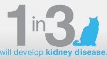 IDEXX SDMA test can help spot kidney disease in cats months or years sooner.