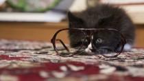 5 Common Cat-health Myths