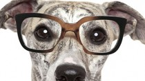 April Fools! 5 Amazing Pet Products that Never Existed